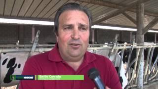 verde-regione-puntata-del-16-06-2015