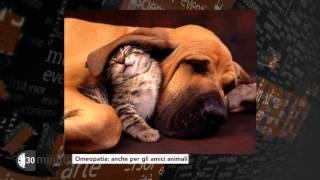 30-minuti-medicina-naturale-omeopatia-per-gli-amici-animali