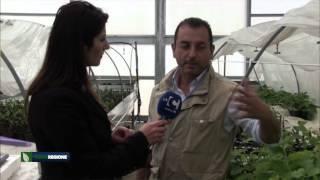 verde-regione-puntata-del-14-05-2015