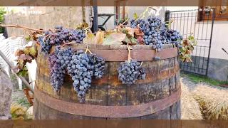 10-10-2017-lac-storie-vendemmia-in-festa